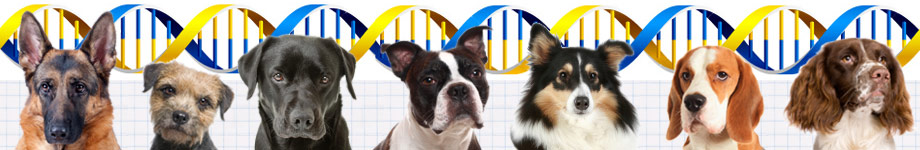 Dog Breed Health Rotating Header Image